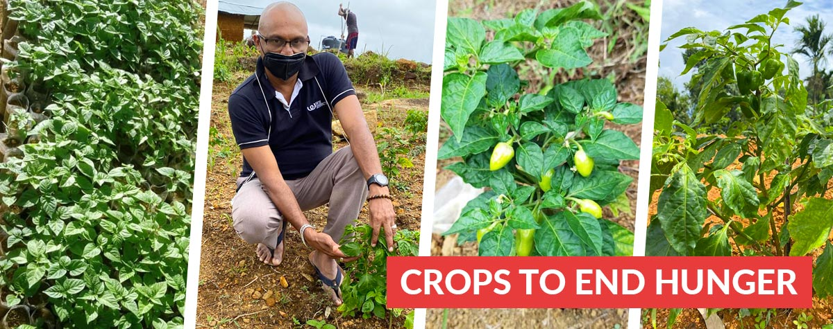 Crops to end hunger